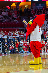 NORMAL, IL - February 16:  Reggie Redbird shoots a tshirt from a compressed air powered launcher during a college basketball game between the ISU Redbirds and the Bradley Braves on February 16 2019 at Redbird Arena in Normal, IL. (Photo by Alan Look)