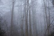 Fog morning Paisage, saisons de minihic sur rance