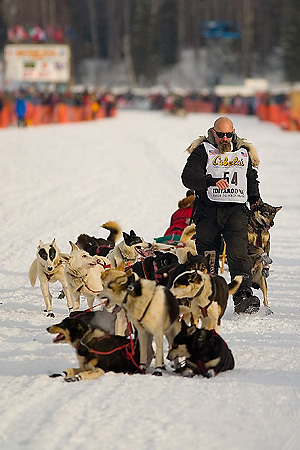 05 March 2006: Willow, Alaska - Paul Ellering, former professional wrestler, brings a dog up from mid pack to replace his troublesome lead dog during the restart of the 2006 Iditarod on Willow Lake in Willow, Alaska