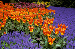 Holland: The incredibly beautiful flower displays at Keukenhof Gardens in Lisle draw visitors from around the world.