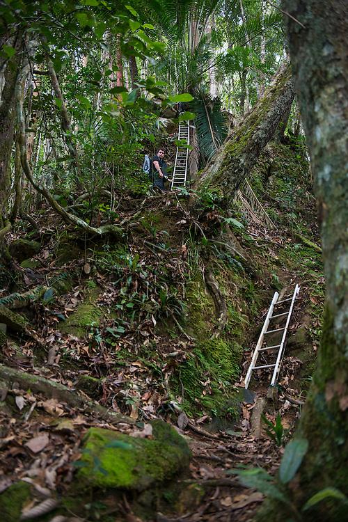 Ladders set out as a path in the jungle, Maliau Basin, Sabah, Malaysia, Borneo,