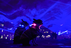 "© Licensed to London News Pictures. 17/01/2018. LONDON, UK. (L to R) Henry and Bess, a pair of Boston terriers are seen amongst ""Waterlicht"" by Daan Roosegaarde in Granary Square, Kings Cross.  Preview of Lumiere London, the capital's largest arts festival commissioned by The Mayor of London and produced by Artichoke.  Light installations by leading artists have been set up, both north and south of the river for the public to view 18-21 January.   Photo credit: Stephen Chung/LNP"
