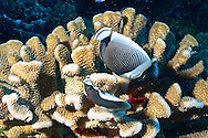 Reef and coral of Rangiroa atoll
