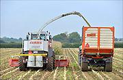 Nederland, Nederasselt, 5-10-2015 Maisoogst. Foto: Flip Franssen/HH