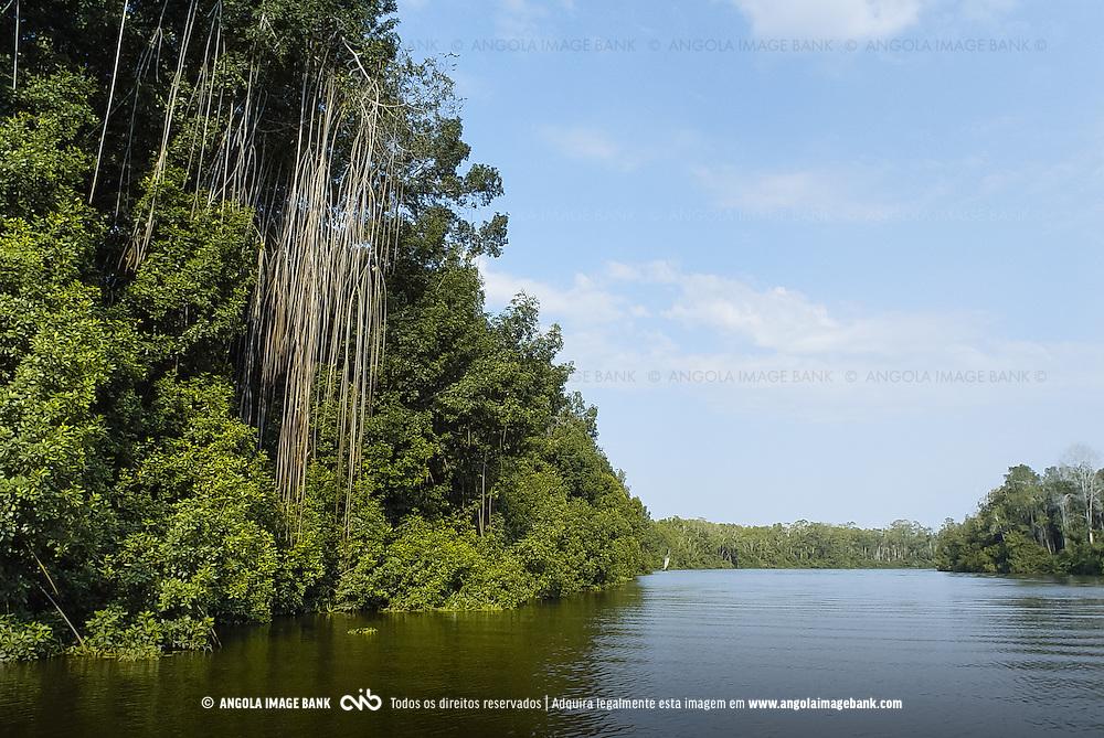 O Rio Kwanza perto da foz e as florestas de mangais ao longo das duas margens. Bengo, Angola
