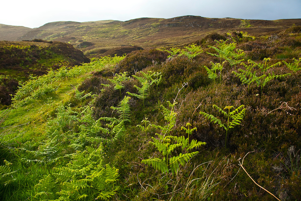 Paisaje con helechos. Abhainn Ghearadha. Northeast Lewis Island. Outer Hebrides. Scotland, UK