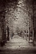 Alley in a park in Paris, France