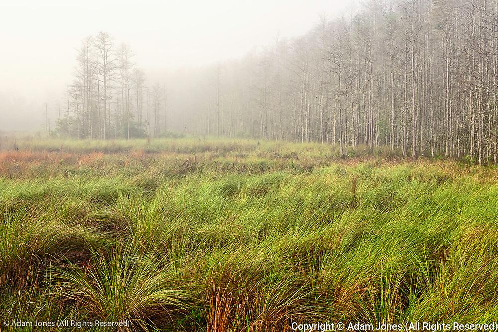 Foggy morning, Corkscrew Swamp Sanctuary, Florida