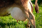 Grazing raises the level of omega 3 fatty acids in the milk.