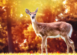 A doe stops in an autumn field to pose for a profile photo