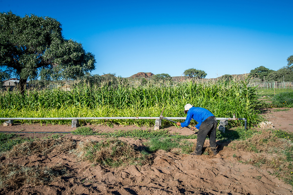 Farm worker using a pickaxe while working on Dabis Guest Farm in Helmeringhausen, southern Namibia, Africa.