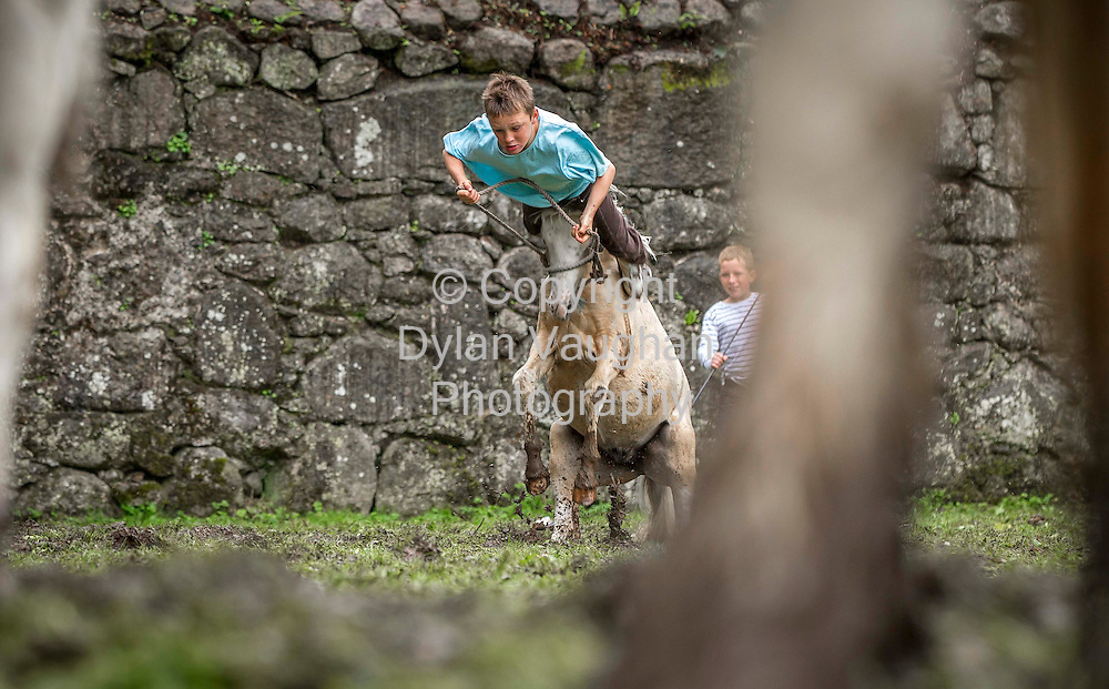 15/7/2012.Willie Casey aged 13 from Carlow pictured at the Borris Horse Fair in County Carlow yesterday...Picture Dylan Vaughan