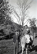 father and son with cow and holding flowers