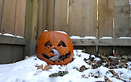 Rotting pumpkin in snow