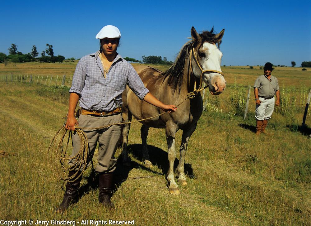 South America, Uruguay, Florida, ranch, unique Uruguayan Criollo horse on a ranch or estancia.
