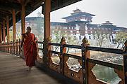 Monk walking over bridge to Pumakha Dzong, Bhutan