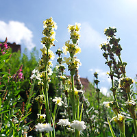 Low angle view of garden flowers in summer outdoors