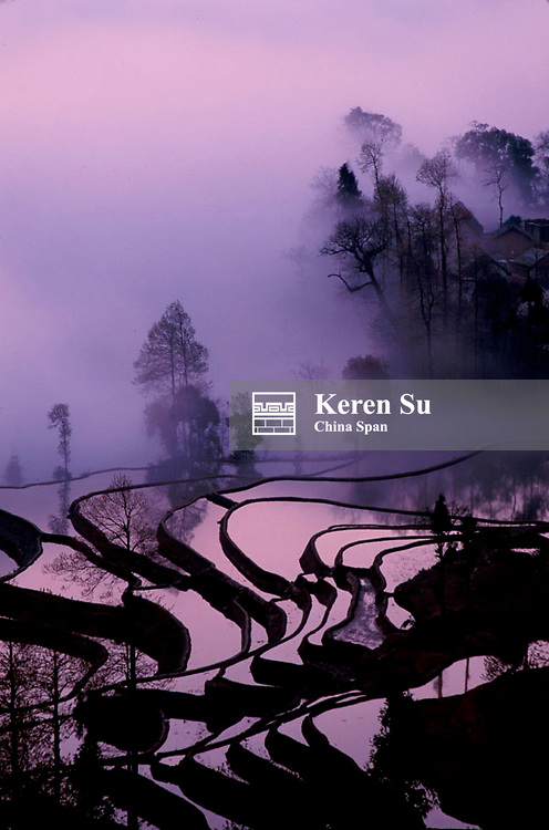 Water filled rice terraces in the mist, Yuanyang, Yunnan Province, China