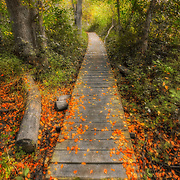 Colorful leaves in fall on a nature trail at Retzer Nature Center in Waukesha,WI. Photo by Jennifer Rondinelli Reilly.