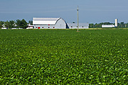 soybeans and barn<br />St. Isadore<br />Ontario<br />Canada
