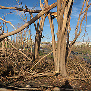 SEPTEMBER 29 - SAN JUAN, PUERTO RICO - <br /> Trees and vegetation near CUPEY knocked down by the winds packed by Hurricane Maria.<br /> (Photo by Angel Valentin for NPR)