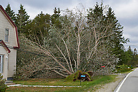 Tree downed on power lines by Hurricane Dorian Cherry Hill, Nova Scotia, Canada