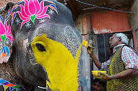 Inde, Rajasthan, Jaipur, peinture et decoration des elephants pour le festival des elephants. // India, Rajasthan, Jaipur, painting of the elephant for the elephant festival.