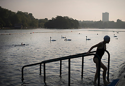 © Licensed to London News Pictures. 15/09/2016. London, UK. A member of The Serpentine Swimming Club takes a dip amongst the swans in Hyde Park. Another exceptionally warm Autumn day is expected today in parts of the United Kingdom. Photo credit: Ben Cawthra/LNP