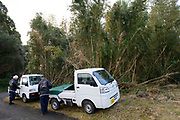 Father and son bowyers, Remei and Keitarou Yokoyama arrive at a bamboo grove to harvest bamboo. Yokoyama Reimei Bowmakers, Miyakonojo, Miyazaki Prefecture, Japan, December 23, 2016. A handful of bowyers from the Kyushu city of Miyakonojo make over 90% of all the bows used in traditional Japanese archery. The bows are made from laminated bamboo and haze wood in process that consists of over 200 individual tasks. At over two meters from tip to tip the bows the longest used in the world.