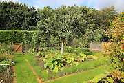 Vegetable garden at Potager Garden, Constantine, Cornwall, England, UK