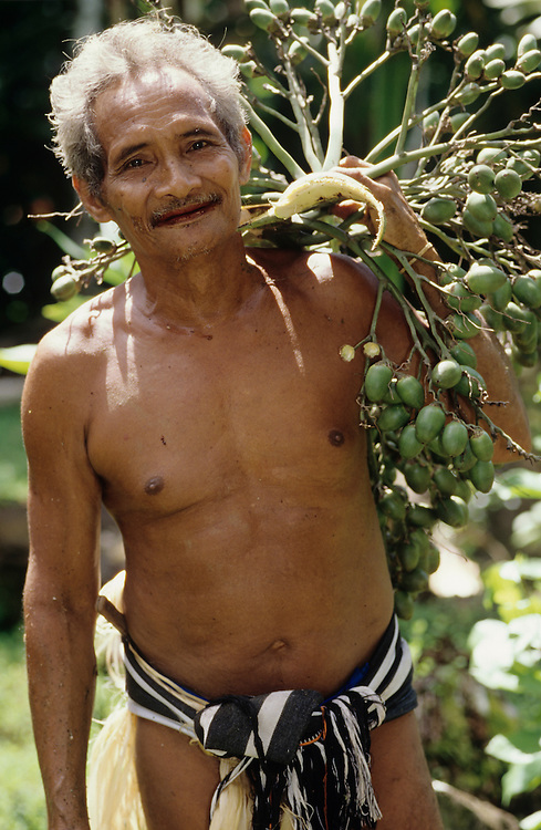 Beetlenut tree harvest by John Genong tree climber, wearing Kefar, using Gabing on feet, Yap, Wa`ab, Waqab, Federated States of Micronesia, islands in the Caroline Islands