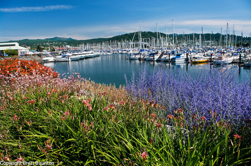 Bellingham Boat Harbor, Flowers of summer, Bellingham Bay, WA