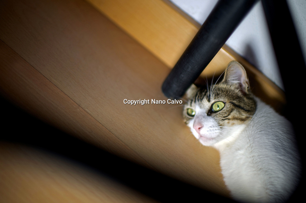 Portrait of cat under a table