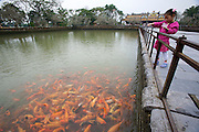 The Citadel. Imperial Enclosure. Little girl feeding Koi at the pond from Trung Dao Bridge.