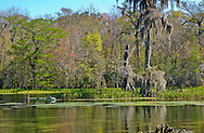 another sunny day at Wakulla Springs State Park, Florida.