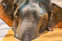 Tusked elephant taking a bath, Yala National Park, Southern Province, Sri Lanka.