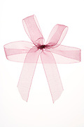 close up of a fragile translucent gift wrap bow