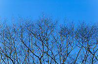 Tree branches against blue sky.