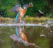 Fauna - Birds : Other