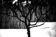 Family landscapes. Mira-sol. A tree shadow projected on a backyard fence at night