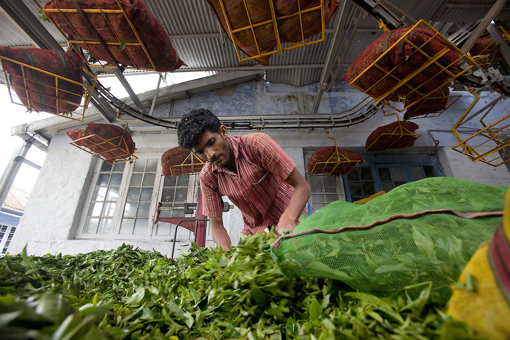 A worker sorts tea leaves at a Tea estate in Conoor, India, on Friday May 21, 2010. Photographer: Prashanth Vishwanathan/Bloomberg News