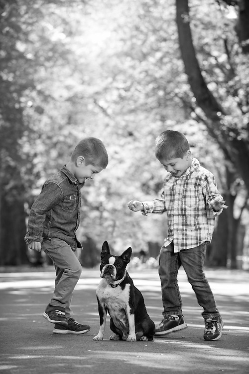 Photo of twin boys with Boston terrier on Comm Ave Mall.