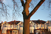 Trunk of a  100 year-old mature Ash tree in front of Edwardian era semi-detached houses on Ruskin Park, Denmark Hill, SE24 London