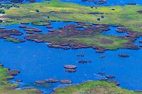 Aerial view of hippos in water, Okavango Delta, Botswana.