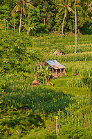 A hut in rice fields in a valley inland from Amed, Bali, Indonesia