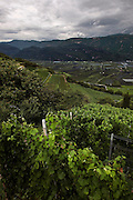 Italy, Sudtirolo. Tramin, Trameno.
