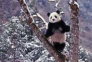 China Wildlife