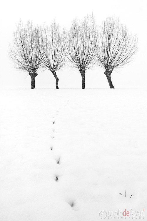 Snow in the ground and hazy atmosphere are just the best conditions for highly graphical and minimalist photos such as this one. I took this picture in the fields around my home town of Scalenghe in Piedmont, Italy, on a cold morning at the middle of Decemeber, a few minutes after sunrise and under a heavy snowfall. The impressions in the snow are rabbit's footprints. In fact, I spotted the little critter for a moment beside one of those trees, but then it suddenly disappeared. I thought there had to be its nest there.