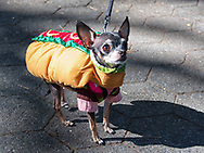 Dog Fashion in Central Park