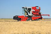 Agriculture Canada Research Station. Harvesting Trials<br /> Indian Head<br /> Saskatchewan<br /> Canada